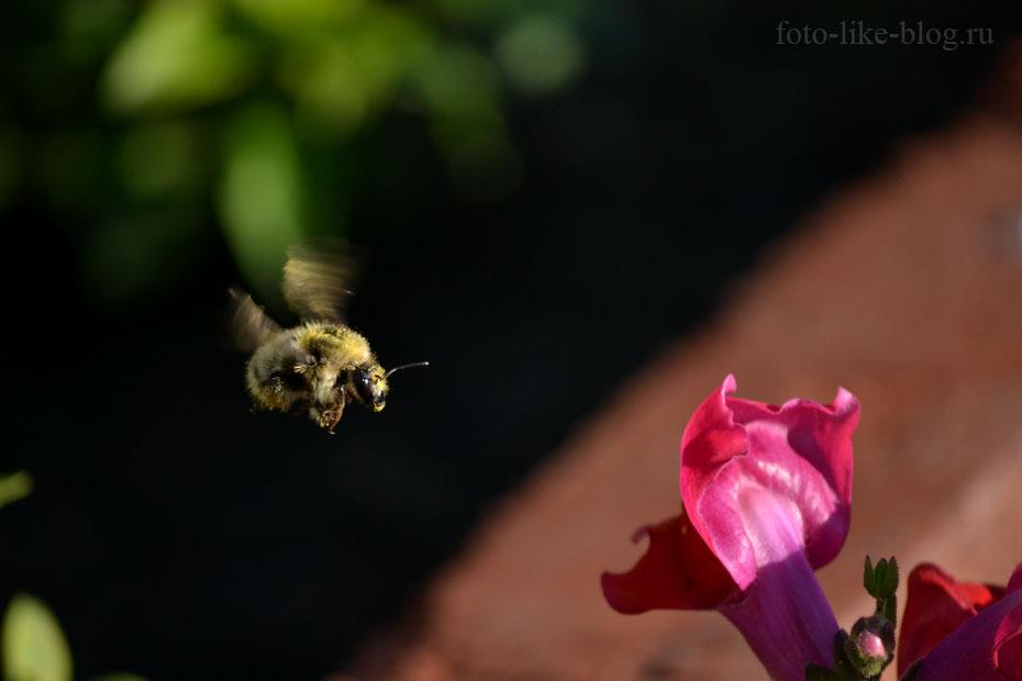 Пример фотографии на Nikon d3100 с короткой выдержкой