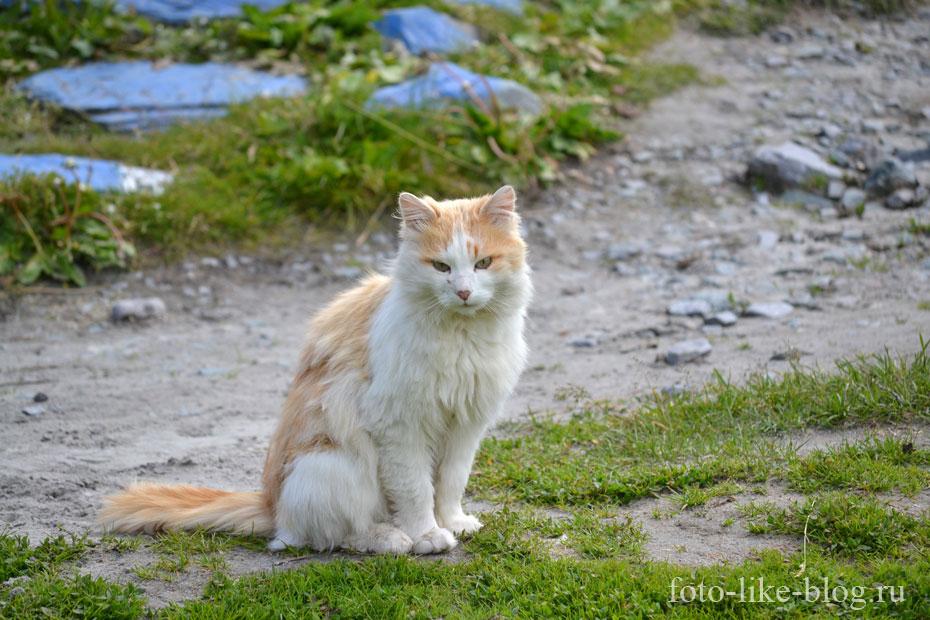 Кот на Ак-Кеме у бочек МЧС