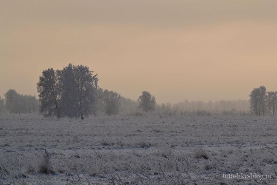 Березы в холодном зимнем тумане - Nikon d3100