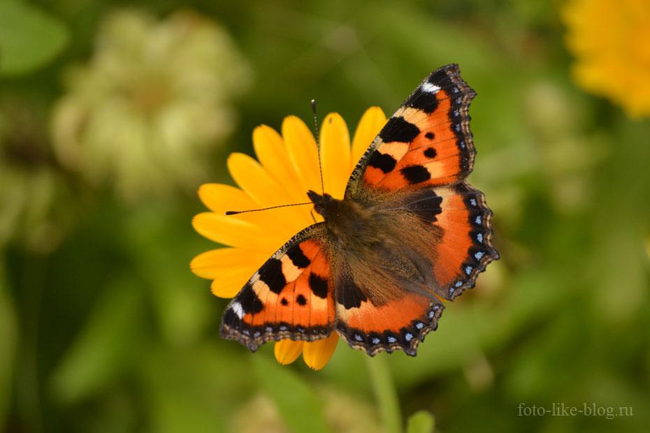 Фото бабочки - Nikon d3100