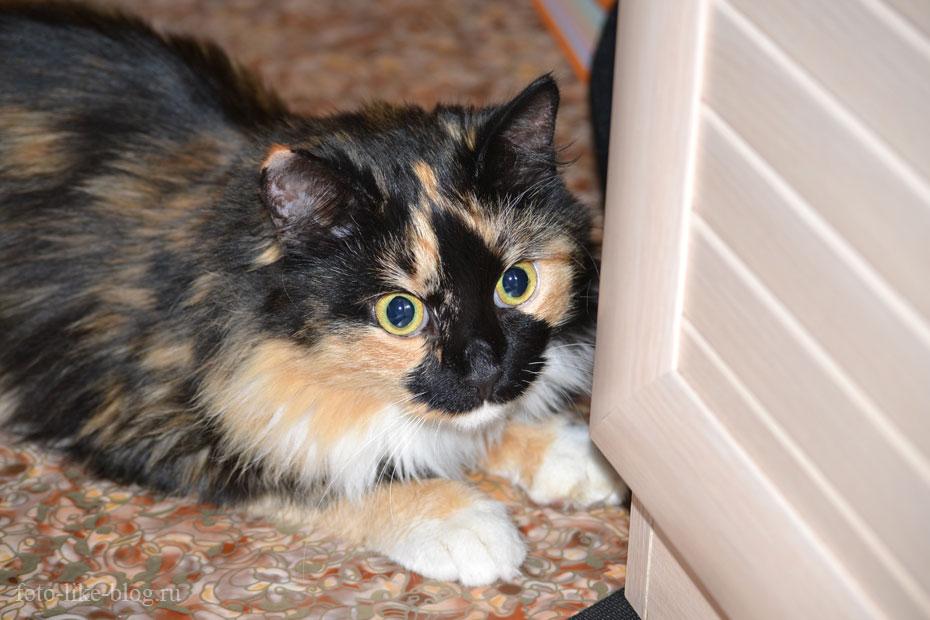 Фото кошки со вспышкой, Nikkor 55-200mm f/4-5.6G
