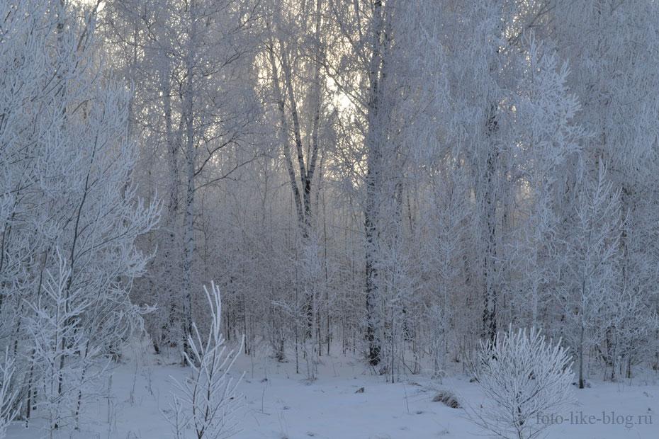 Зимний утренний лес