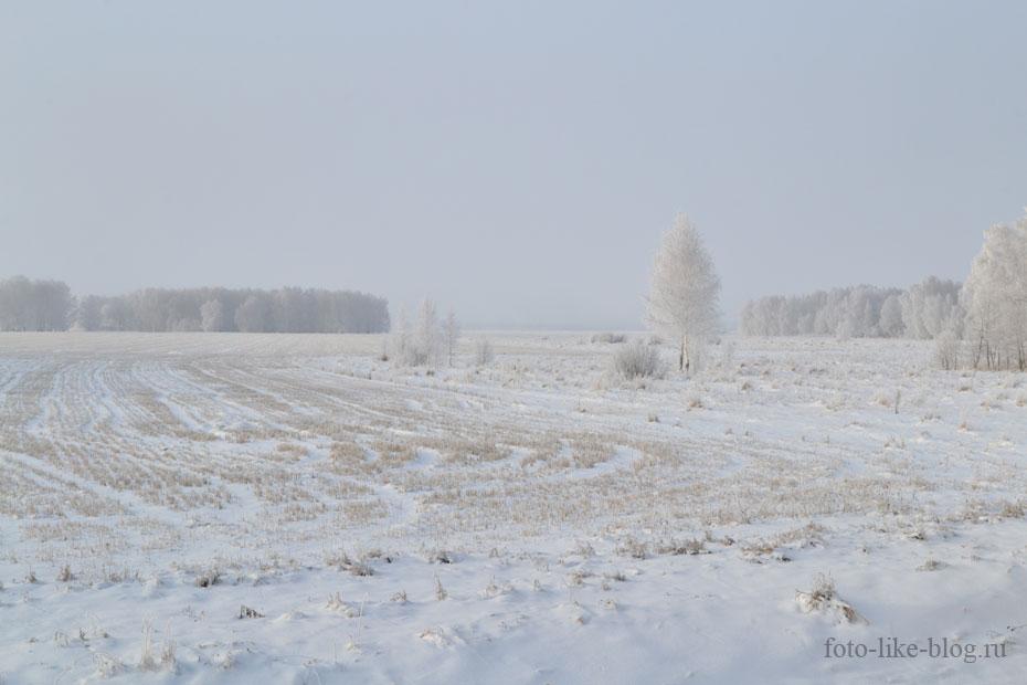 Поле пшеницы в снегу