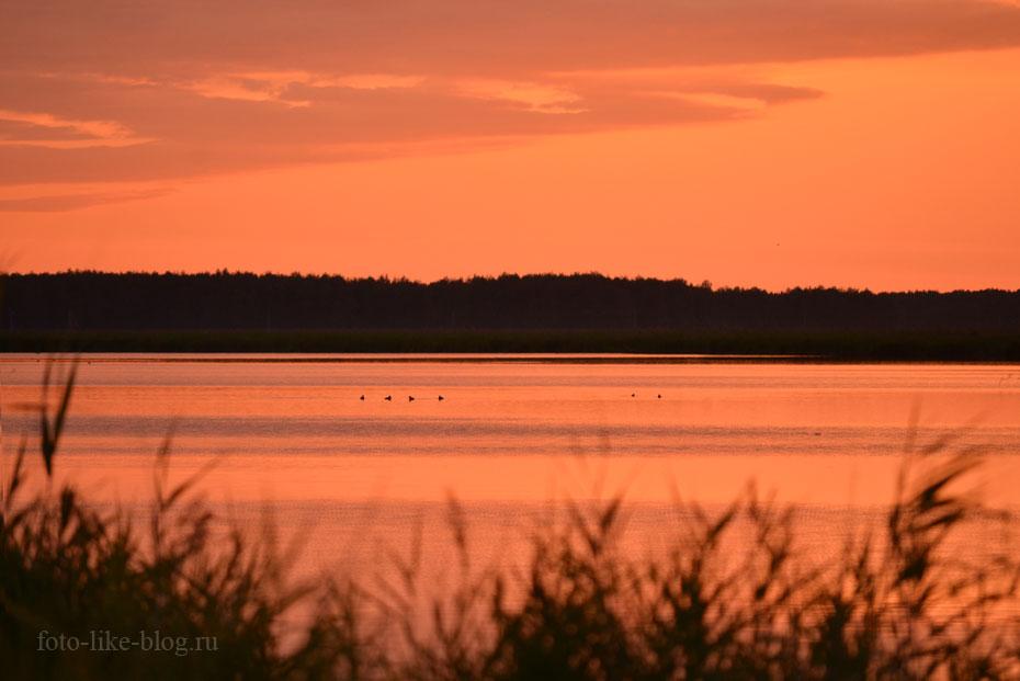 Розовый закат на озере Большой Артуган в р. п. Чаны