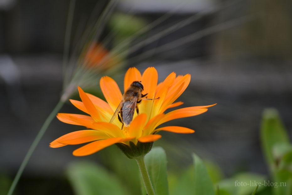 Оса на цветке, Nikkor 55-200mm f/4-5.6G